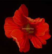 IMMORTALITY II
